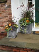 finally from pocket full of posies design this planting uses