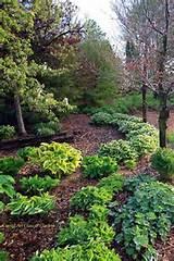 hosta woodland gardenglasses gardens gardens ideas woodland gardens