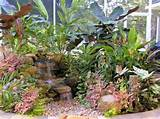 tropical garden tropical gardening and landscaping ideas pinterest