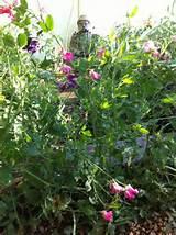 herb garden | Herb Garden Ideas | Pinterest