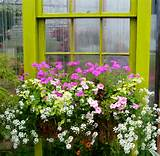 Window Box Planting Ideas - Gardener Gardens