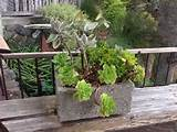planter ideas | outdoor living space | Pinterest