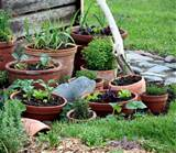 Vegetable Container Garden Ideas