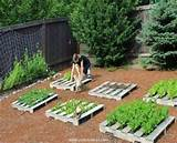 Enjoy Pallet Gardening in Creative Way | Pallet Ideas