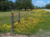 Country roads | Garden Ideas | Pinterest
