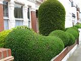 Popular Home Garden Hedges Idea | curb appeal | Pinterest