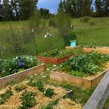 raised bed garden garden ideas pinterest