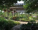 File name: shade-garden.jpg Dense shade In Gardens: