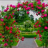 My dream home will have a trellis with rose vines or another pretty ...