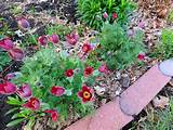 corner garden garden ideas inspiration pinterest