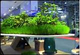 designs indoor floating garden design ideas for your living room