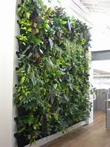 How to Choose the Best Vertical Garden Expert | Interior Design Ideas
