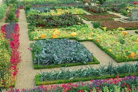 Vegetable garden: Make healthy and green