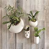 ve noticed an increase in planters and design for indoor gardening ...