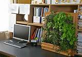 Vertical Garden Ideas Inspiration Appealing vertical garden ideas ...