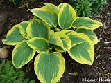 list of my favorite gardening magazines including hosta and perennial
