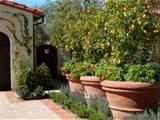 lemon trees in big pots | Secret Garden | Pinterest