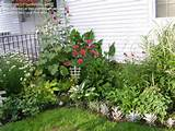 Garden Design: My small house backyard flower beds, 1 by buckimom
