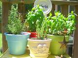 Herb garden container ideas for your deck or patio | Archadeck of ...