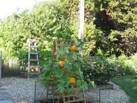 Pumpkin trellis | Garden ideas | Pinterest