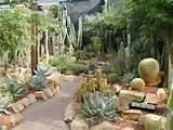 cactus garden desertscape xeriscape ideas pinterest