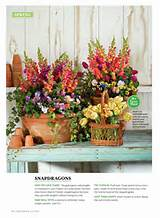 southern living container gardening newsstand on google play