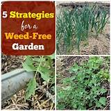 Ingenious Strategies For A Weed Free Garden