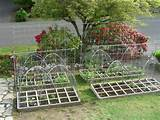 this weekend hubby and i built trellises lots of trellises for the