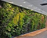 Appliances, Awesome Indoor Vertical Garden Wall With Lamps Variation ...