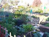 community garden our pins pinterest