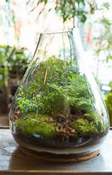 ideas indoor gardens urban gardens diy indoor terrarium cities