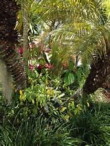 growing orchids in florida gardening florida style pinterest