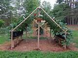 PVC Pipe Vertical Trellis Garden | Happy House and Garden