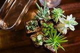 DIY Indoor Succulent Garden | The Creative Mama