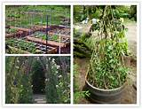 15 creative diy garden pea trellis how to instructions