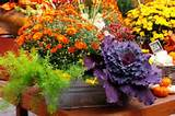 in selecting just the right plants for your garden and get planting