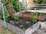 above ground vegetable garden boxes