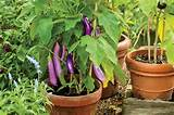 fruit and vegetable container gardening tennessee home and farm