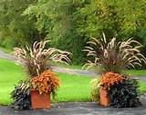 fall planter ornamental grass gardens ideas ideas for fall
