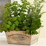 kitchen herb garden ideas 12 pics