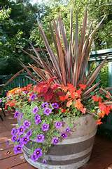 fall container idea garden go green pinterest