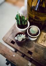 ... the form below to delete this indoor cactus garden ideas image from