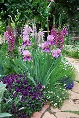 garden pencie s foxglove iris gardens ideas cottages gardens