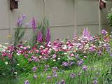 Wild flower garden | Garden Ideas | Pinterest