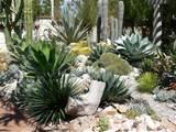 Cactus Succulent Garden Designs