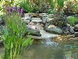 Pond re design and renovation | Landscape Garden Designers, Reading ...