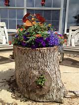 planter made from a hollow log garden decor garden ideas you diy
