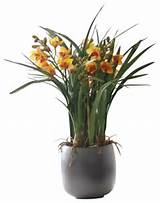 cymbidium orchid in pot flower arrangement traditional artificial