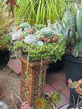 Tags: cactus landscaping ideas , landscaping ideas using cactus ,