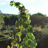 Southern California Gardening: Fall Garden Style